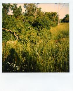 Polaroid Photograph - Bushes outside the Depot